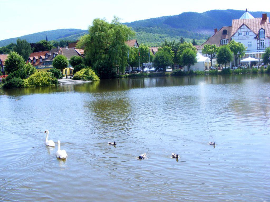 Forellenteich in Ilsenburg