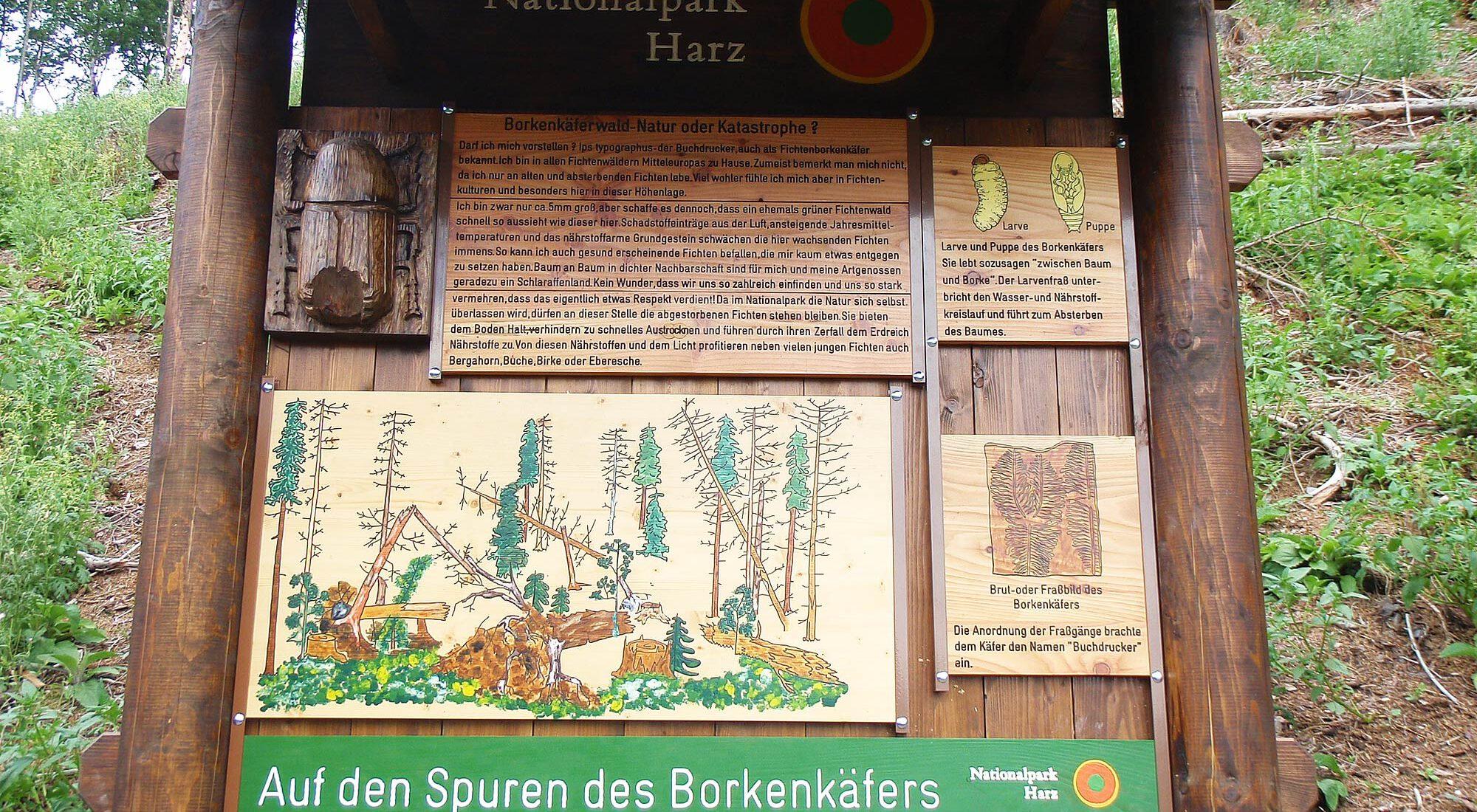 Borkenkäferpfad Ilsenburg